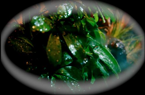 Le terrarium semi-humide /Humide Artfichier_347308_4429686_20150104050552
