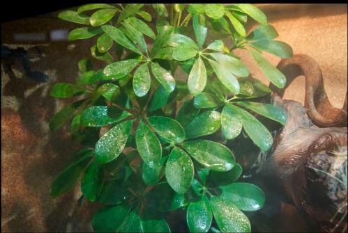 Le terrarium semi-humide /Humide Artfichier_347308_4429693_201501040726384