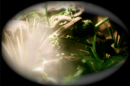 Le terrarium semi-humide /Humide Artfichier_347308_4429746_201501042438789