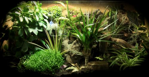 Le terrarium semi-humide /Humide Artfichier_347308_4430389_201501045643108
