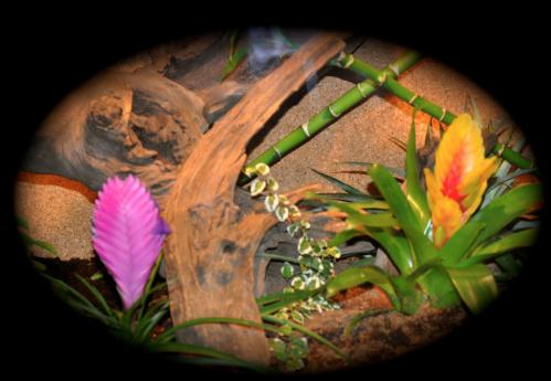 Le terrarium semi-humide /Humide Artfichier_347308_4431548_201501050131322