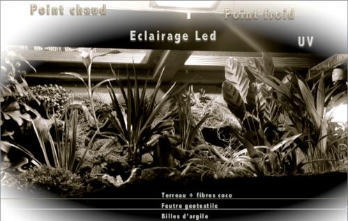 Le terrarium semi-humide /Humide Artfichier_347308_4432050_201501052300930