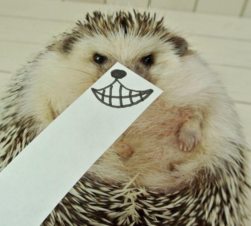 Юмор в картинках - Страница 5 Hedgehog-marutaro-paper-faces-twitter-4__880