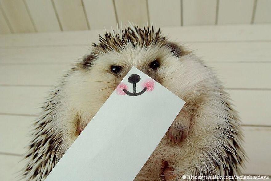 Юмор в картинках - Страница 5 Hedgehog-marutaro-paper-faces-twitter-7__880