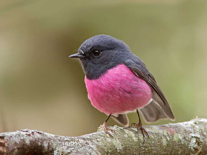 20+ Animals With Unexpected Colors Unusual-colored-animals-141__700