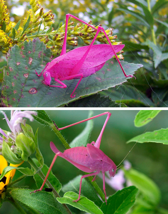 20+ Animals With Unexpected Colors Unusual-colored-animals-1__700