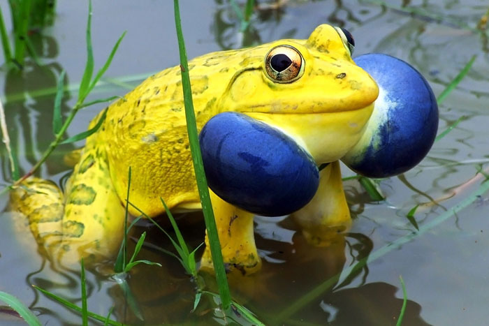 20+ Animals With Unexpected Colors Unusual-colored-animals-61__700