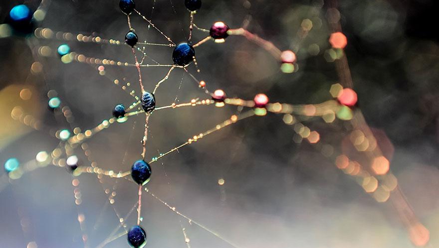 Stunning Macro Photos Of Water Droplets Reveal Their Hidden Beauty Macro-Images-Of-Ivelina-Blagoeva-18__880