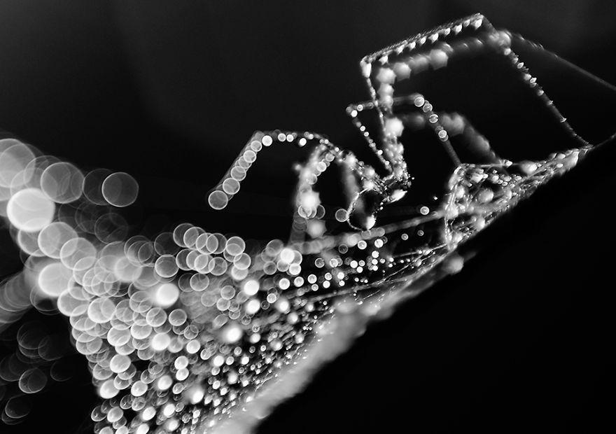 Stunning Macro Photos Of Water Droplets Reveal Their Hidden Beauty Macro-Images-Of-Ivelina-Blagoeva-1__880