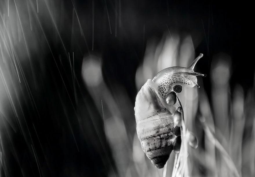 Stunning Macro Photos Of Water Droplets Reveal Their Hidden Beauty Macro-Images-Of-Ivelina-Blagoeva-3__880