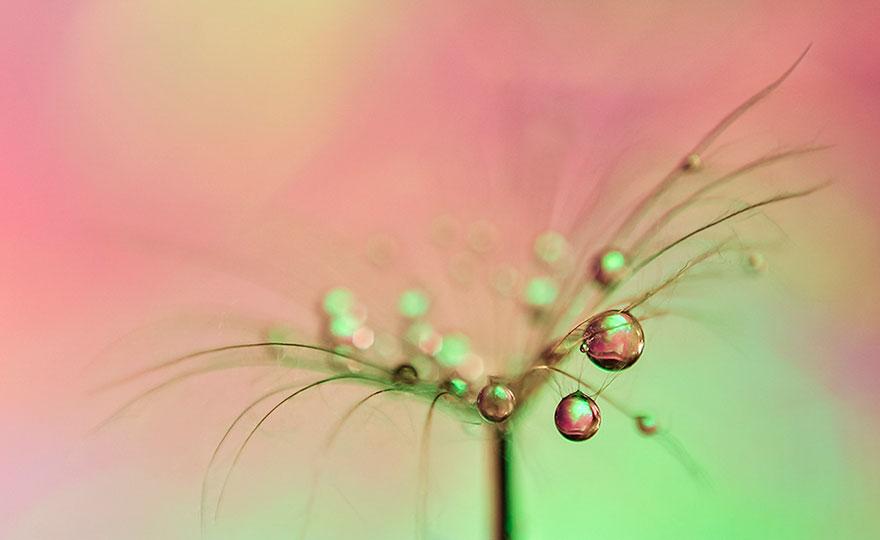 Stunning Macro Photos Of Water Droplets Reveal Their Hidden Beauty Macro-nature-photography-ivelina-blagoeva-20