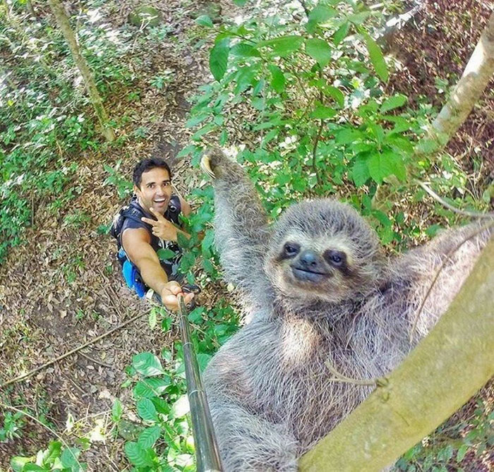 A LITTLE GEM TO DISPEL, FOR A MOMENT, THE DOOM AND GLOOM IN EUROPE - Page 5 Sloth-selfie-stick-nicolas-husclar-1
