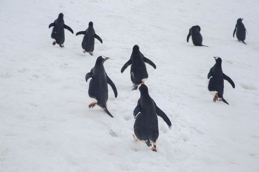 D'un pingouin à l'autre 83A7699-57c6a81b07726__880