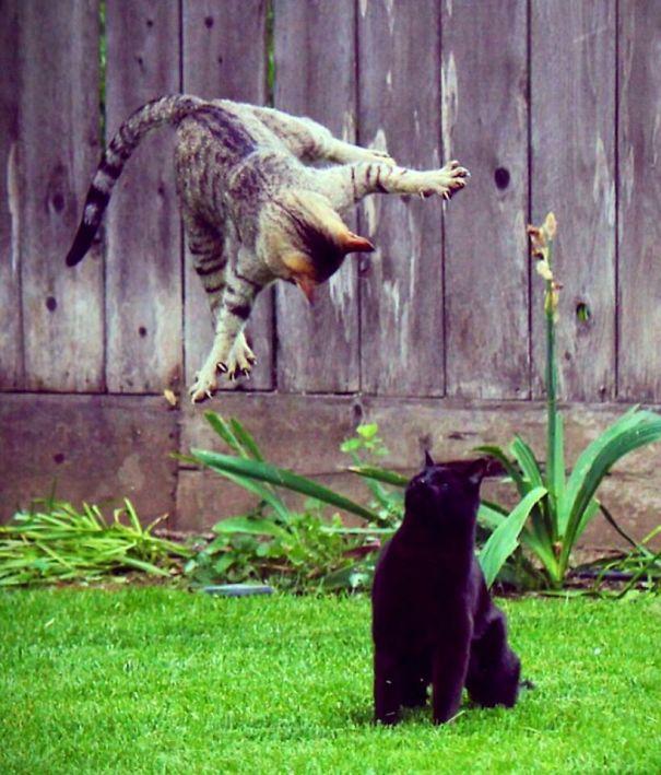 Et si nous étions des chats? IMG_0702-58fa60a2963dc__605