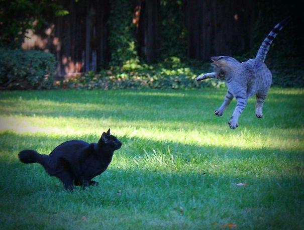 Et si nous étions des chats? IMG_0707-58fa601274991__605