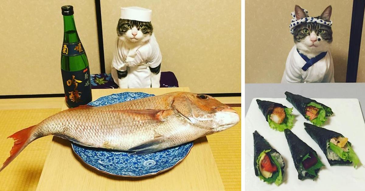 Offtopiqueando - Página 5 Dining-with-dressed-cat-maro-japan-fb7-1