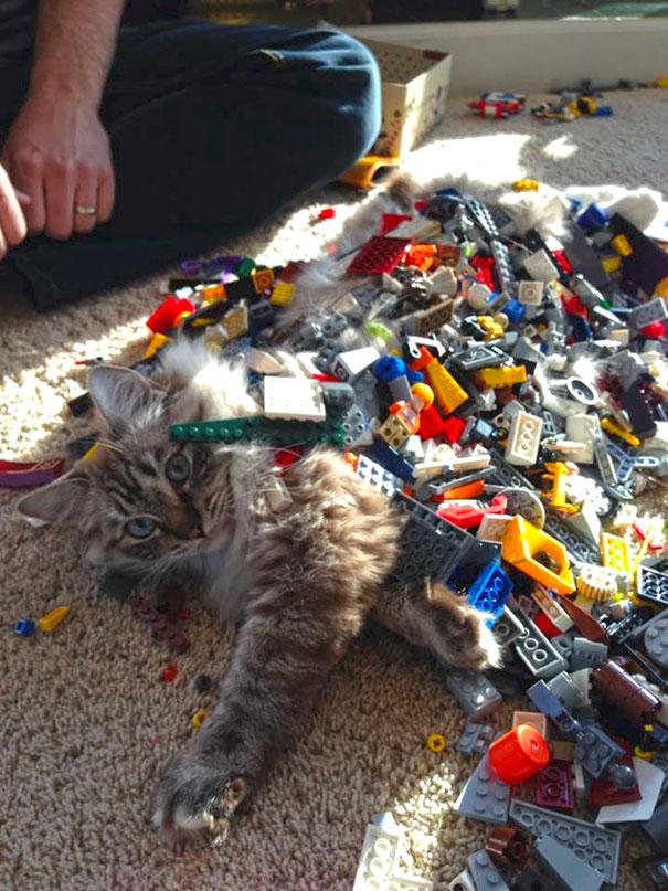 Et si nous étions des chats? Funny-kids-babysitting-pets-33-58f77083be77f__605