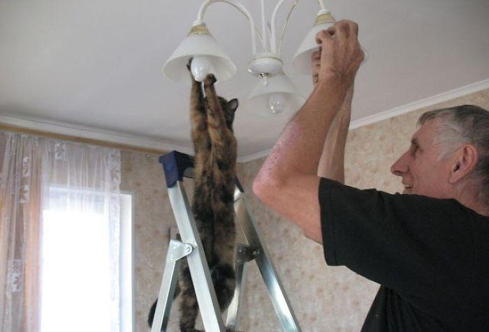 Lidojošie kaķi - Page 6 5934f8bac5e32_hUwJe__700