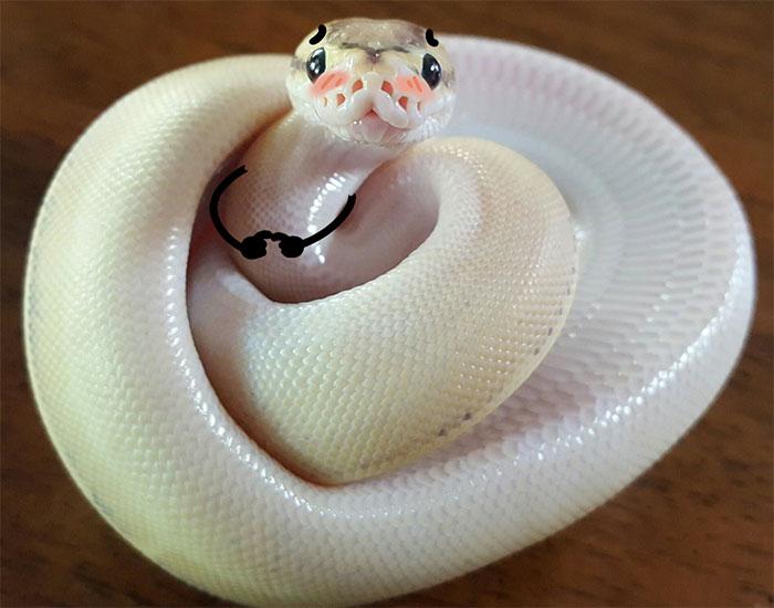 Cumple SrGaliಠth Funny-snakes-arms-doodle-79-5d82120eb04b4__700