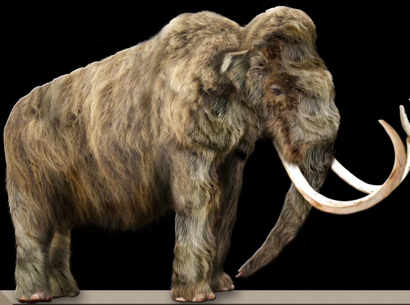 Las especies de animales que los científicos quieren 'resucitar' Image