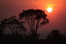 Il problema del movimento è GRILLO_TOPIC UNICO - Pagina 5 Foresta-amazzonica-dove-un-popolo-vive-in-fuga-dai-taglialegna-230x155