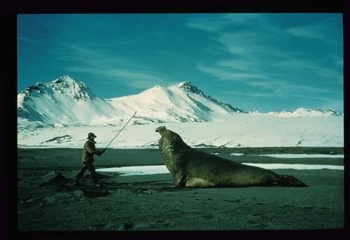 Orca x Elefante Marinho 33118866_3d99fafd71