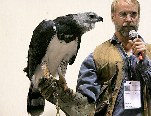 Comparação do tamanho de águias  com relação ao homem. 59216522_958c0e570e