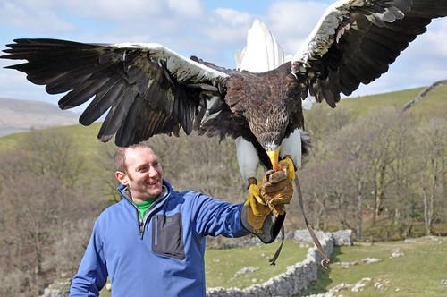 Comparação do tamanho de águias  com relação ao homem. 3404356536_5bb929c72e