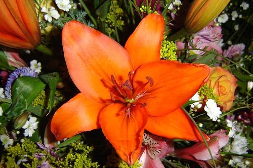 Orange Day - Page 2 84116324_f56d7f6e35