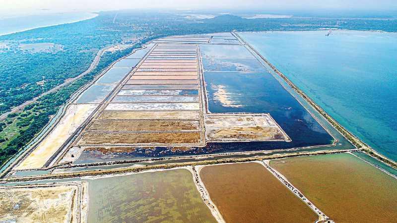 Raigam Wayamba Salterns records substantial growth despite global challenges Image_930abd8028