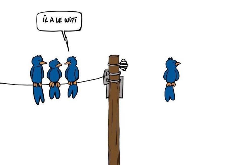 Sondage: pour ou contre le wifi dans les établissements scolaires? - Page 2 Wifi-oiseau