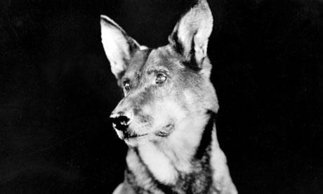 Dogs Rin-Tin-Tin-007