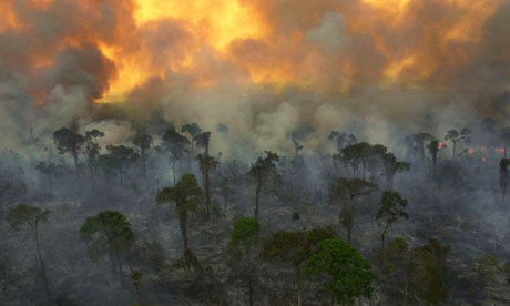 AMAZON FIRE UPDATES - Suspicion Grows As Experts Suggest That Amazon Fires Were Intentional plus MORE Rainforest-460x276