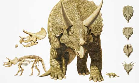 Kit Triceratops Triceratops1.article
