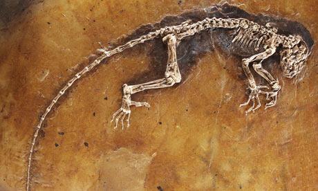 Fosili Ida-the-missing-link-prim-001