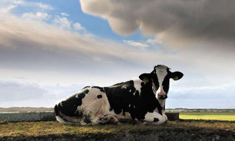 Book review: Mathematics of Life Dairy-cow-007