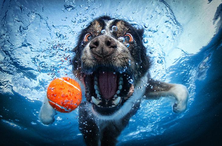 Dogs A-Border-Collie-retrieves-024