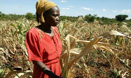 Les réserves mondiales de céréales sont dangereusement basses Zimbabwe-peasant-farmer-008