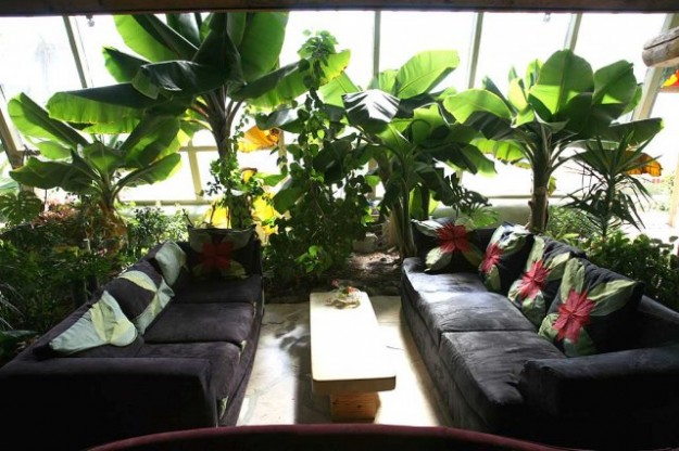 10 Reasons Why EarthShips Are F!#%ing Awesome Phoca_thumb_l_living_phoenix_plants_web-625x416