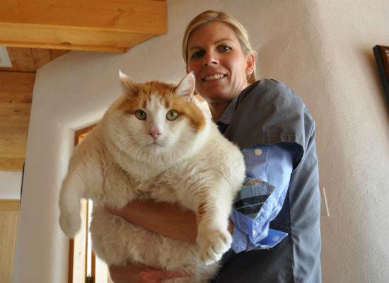 Najdeblja mačka na svijetu uginula usljed zatajenja srca 120508122.4_mn