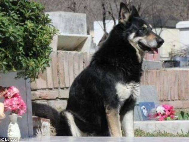 Vjerni pas čuva vlasnikov grob već šest godina 120913118.1_mn