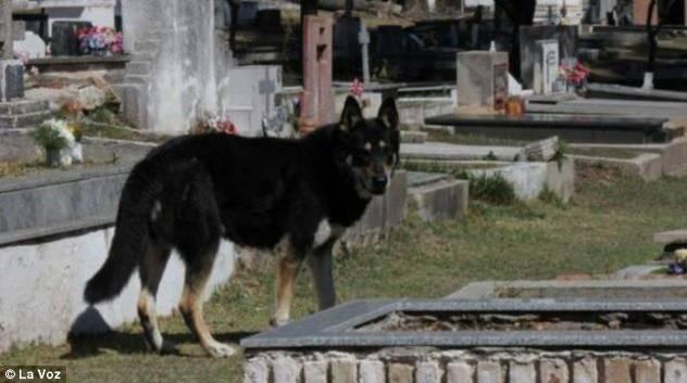 Vjerni pas čuva vlasnikov grob već šest godina 120913118.2_mn