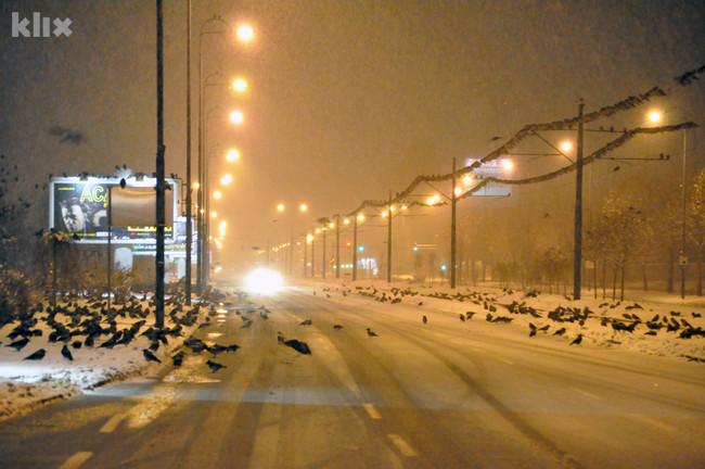 Hiljade vrana okupirale sarajevsku Otoku 121219001.1_mn