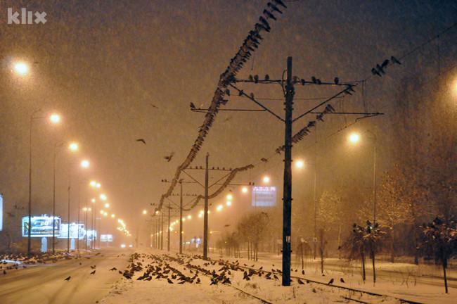 Hiljade vrana okupirale sarajevsku Otoku 121219001.3_mn