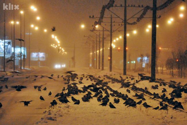 Hiljade vrana okupirale sarajevsku Otoku 121219001.4_mn