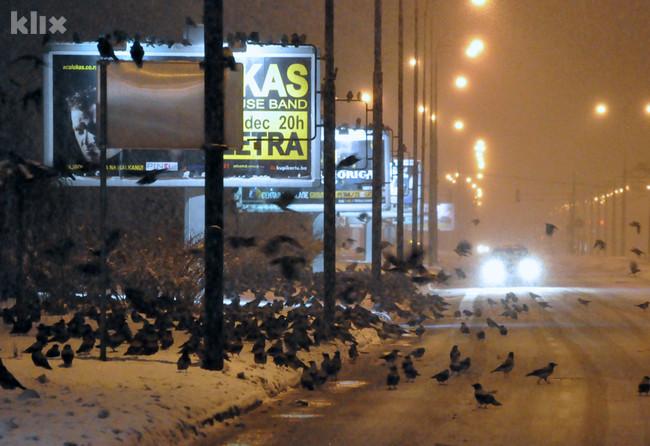Hiljade vrana okupirale sarajevsku Otoku 121219001.5_mn