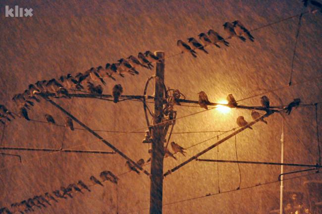 Hiljade vrana okupirale sarajevsku Otoku 121219001.6_mn