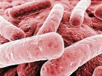 ВОЗ объявила о вступлении мира в пост-антибиотиковую эру Pic_340x255