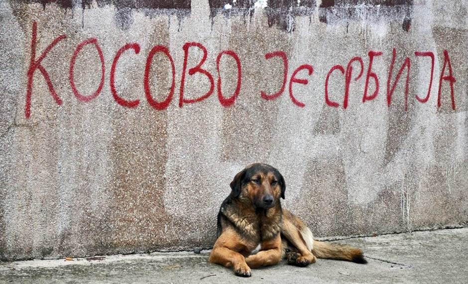 Udomi usvoji da tuzna njuska ne postoji - Page 3 Kosovo-je-srbija-stefan-stojanovic-21