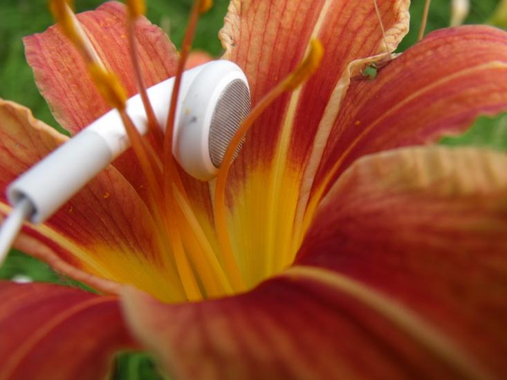 "Plants Have an ""Ear"" for Music 11455_20ba66f905957b34253d9d7abde919f3"